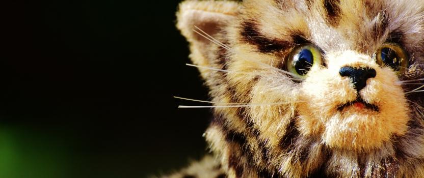 """סנאפצ'ט למען החיות: ניתוח הקמפיין """"הסלפי האחרון"""""""